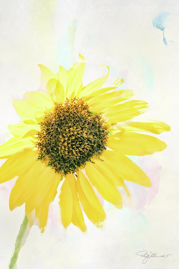 10845 Sunflower by Pamela Williams