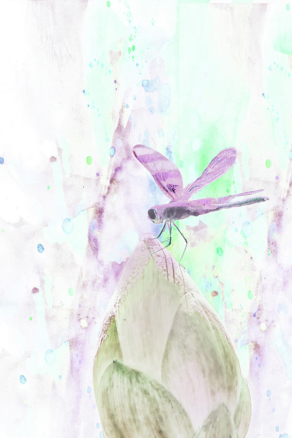 10864 Dragon Fly by Pamela Williams