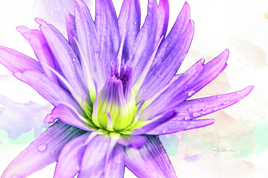 10889 Purple Lily Mixed Media