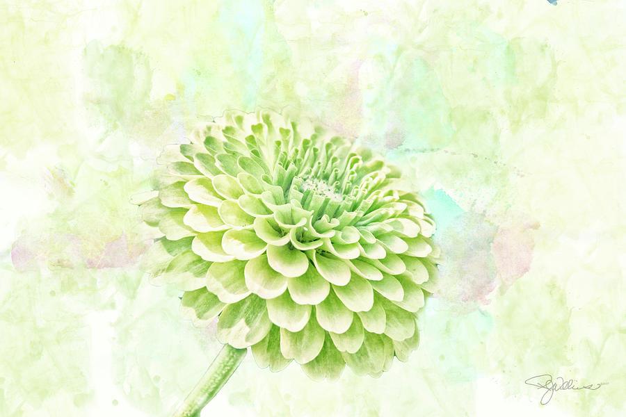 Flower Mixed Media - 10891 Green Chrysanthemum by Pamela Williams