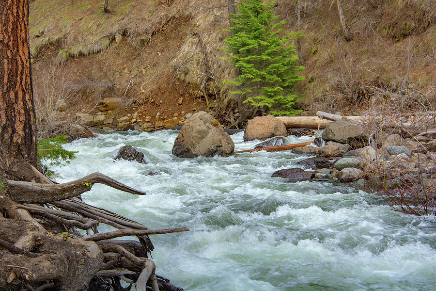 10896 Mountain Stream by Pamela Williams