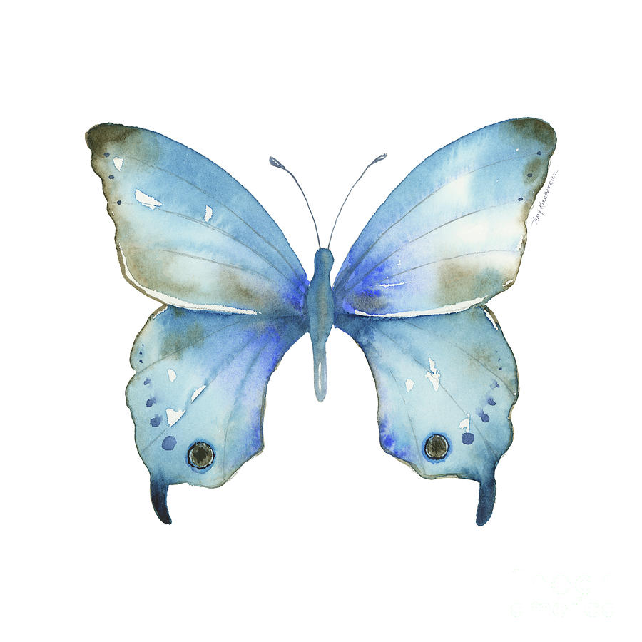 #109 Blue Diana Butterfly by Amy Kirkpatrick