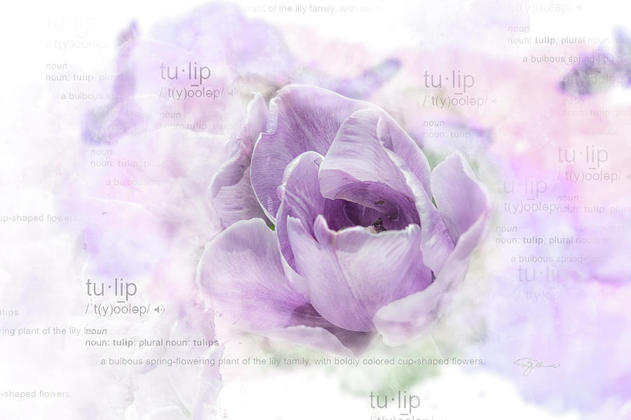 10947 Tulip Photograph