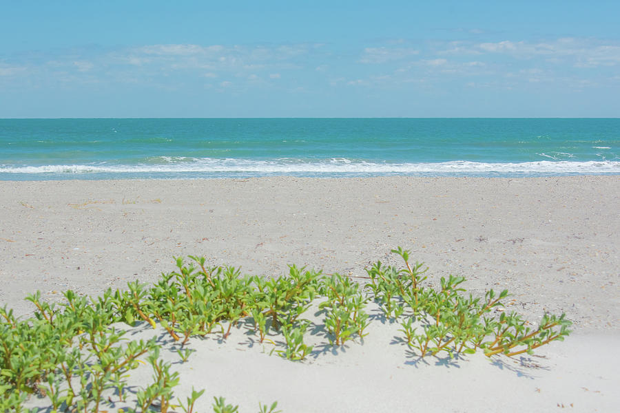 10966 Ocean View by Pamela Williams