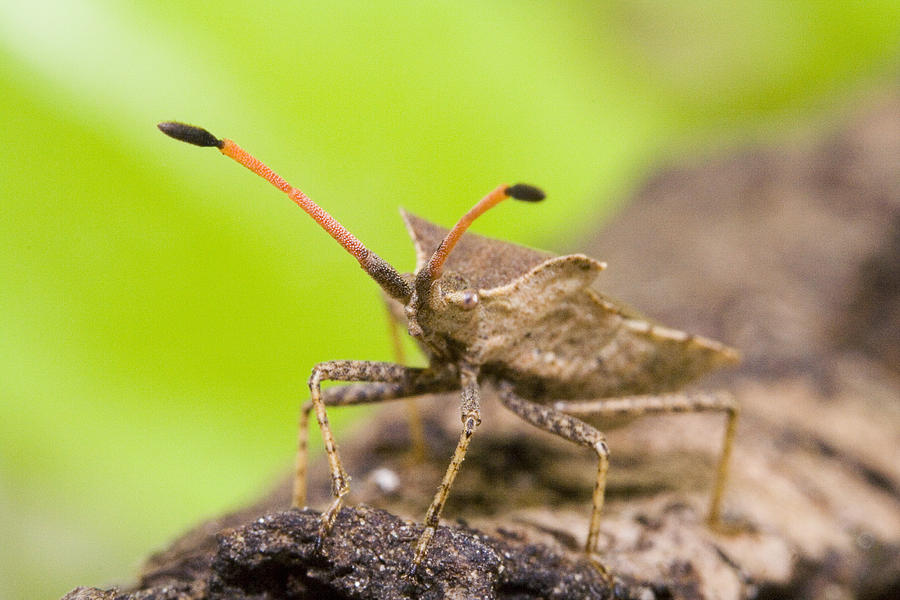 Bug Photograph by Andre Goncalves