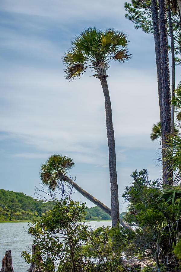 Beaufort Photograph - Palmetto Forest On Hunting Island Beach by Alex Grichenko