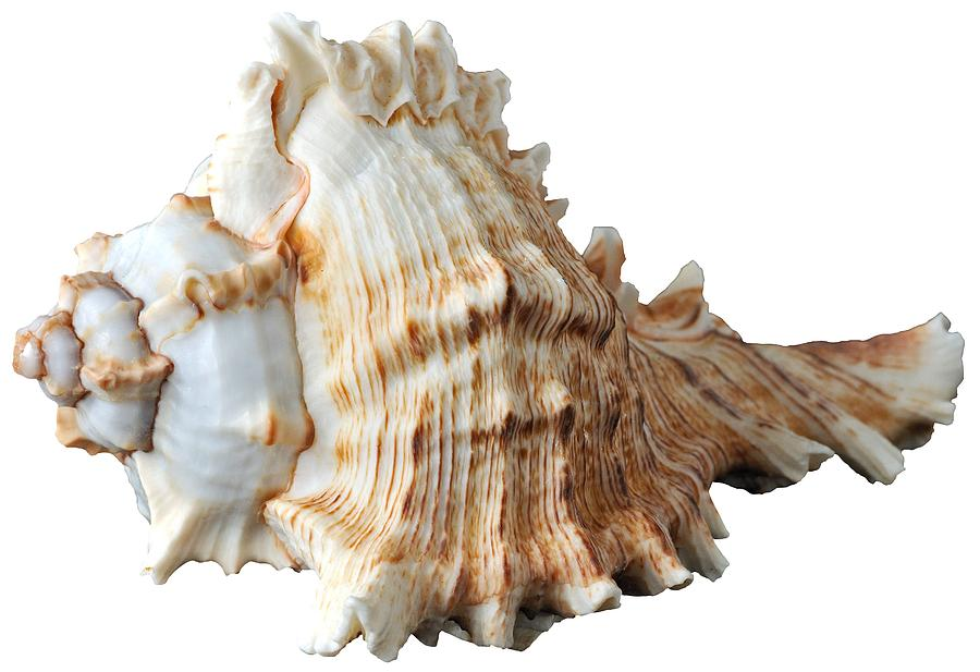 Shell Photograph - Sea Shell by George Atsametakis