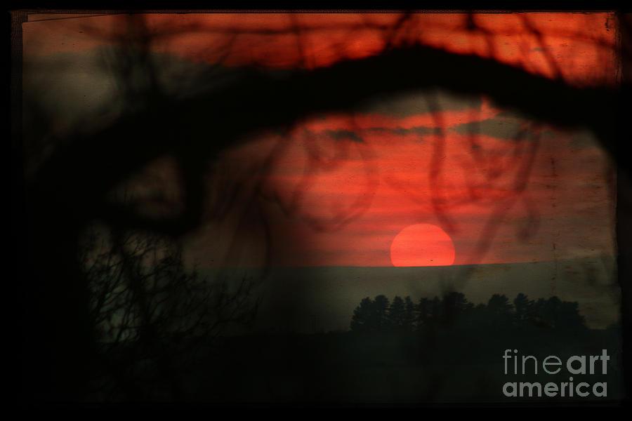 Sunset Photograph - The Sunset by Angel Ciesniarska