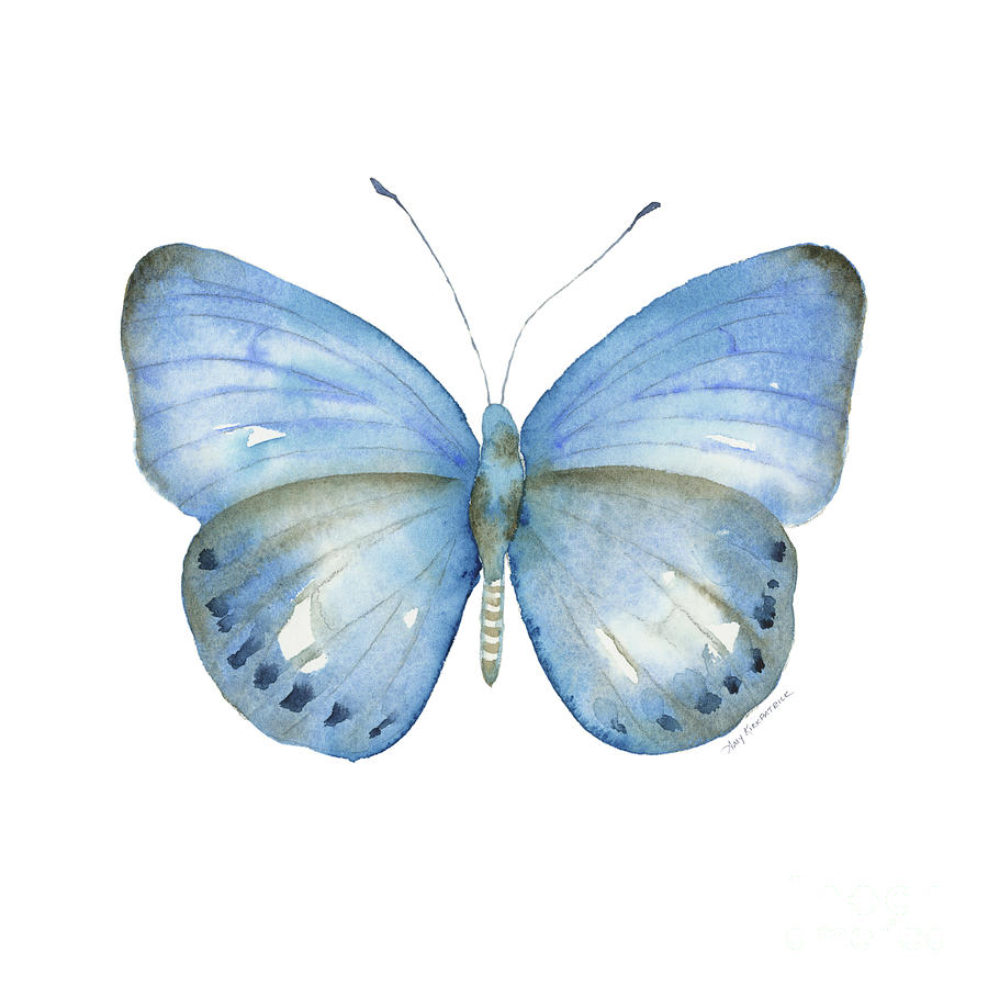 110 Blue Jack Butterfly by Amy Kirkpatrick