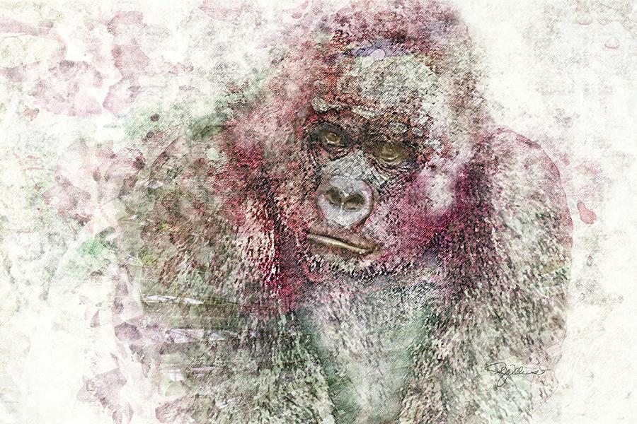 11028 Mr Gorilla Photograph