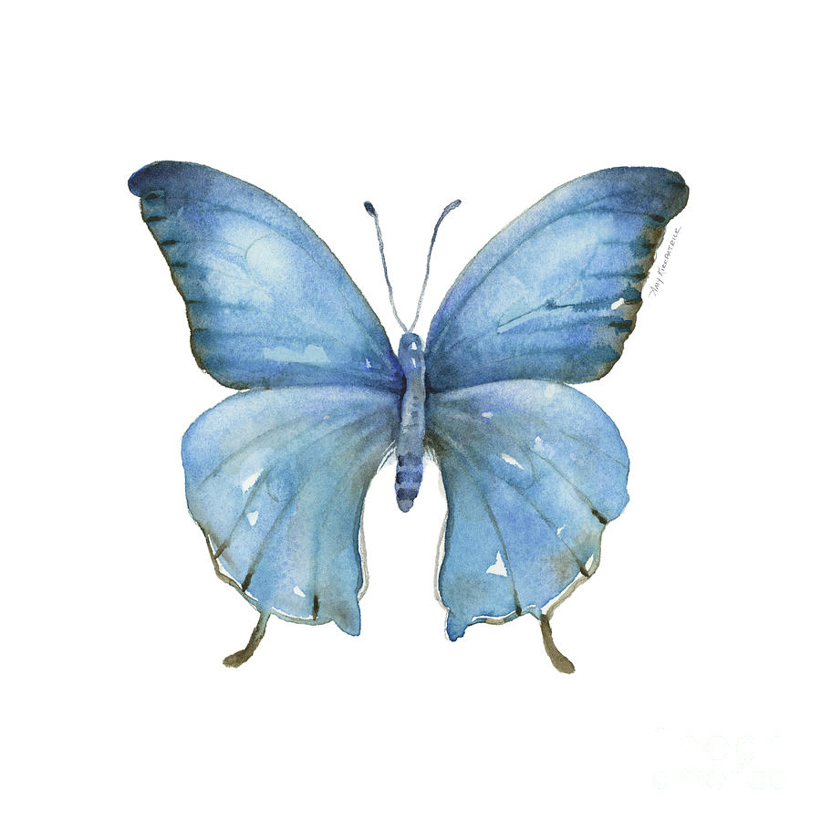 111 Blue Elijah Butterfly by Amy Kirkpatrick