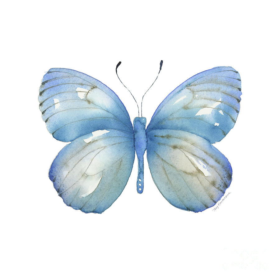 112 Blue Marcia Butterfly by Amy Kirkpatrick