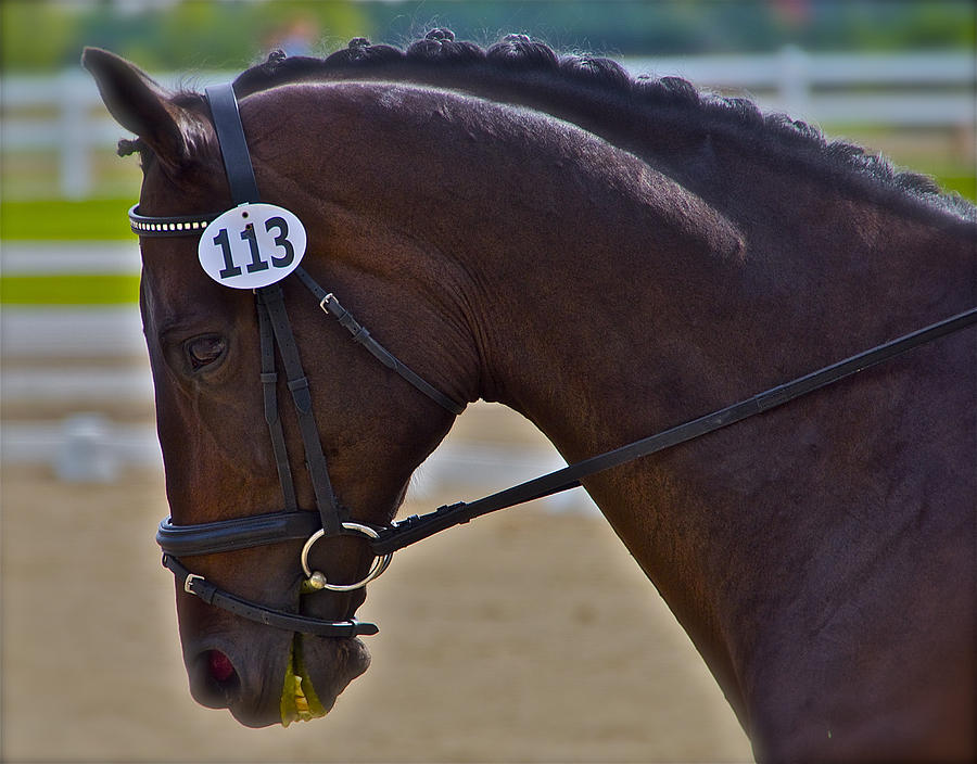 Dressage Photograph - 113 Guiness by Sherri Cavalier