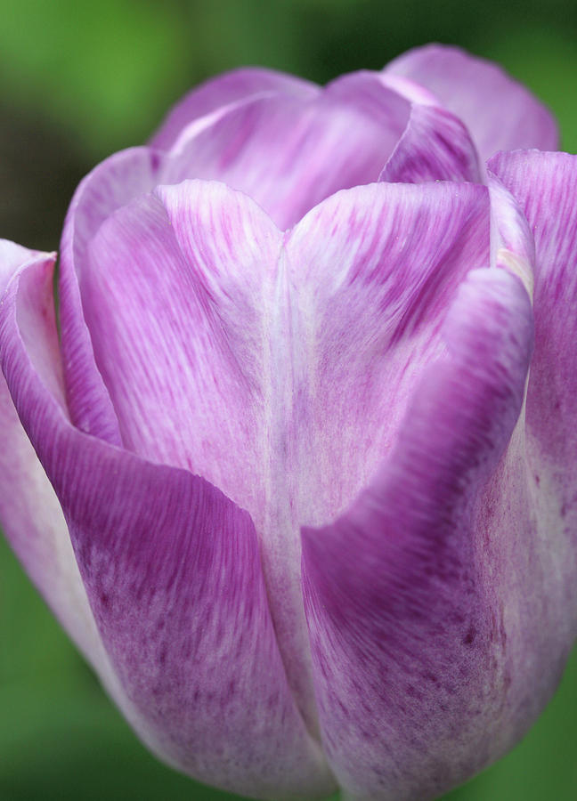 Flower Photograph - Untitled by Paul Drewry