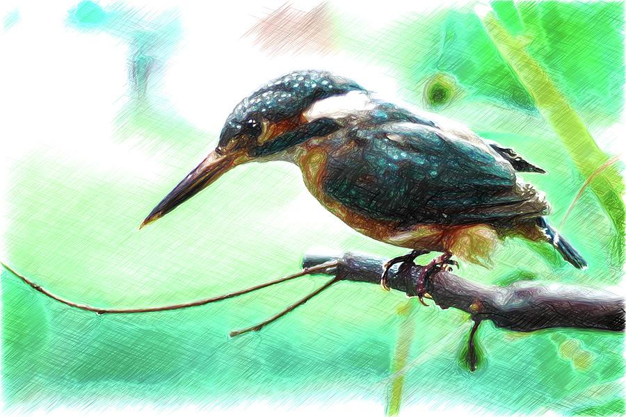 11447 Kingfisher Sketch Photograph