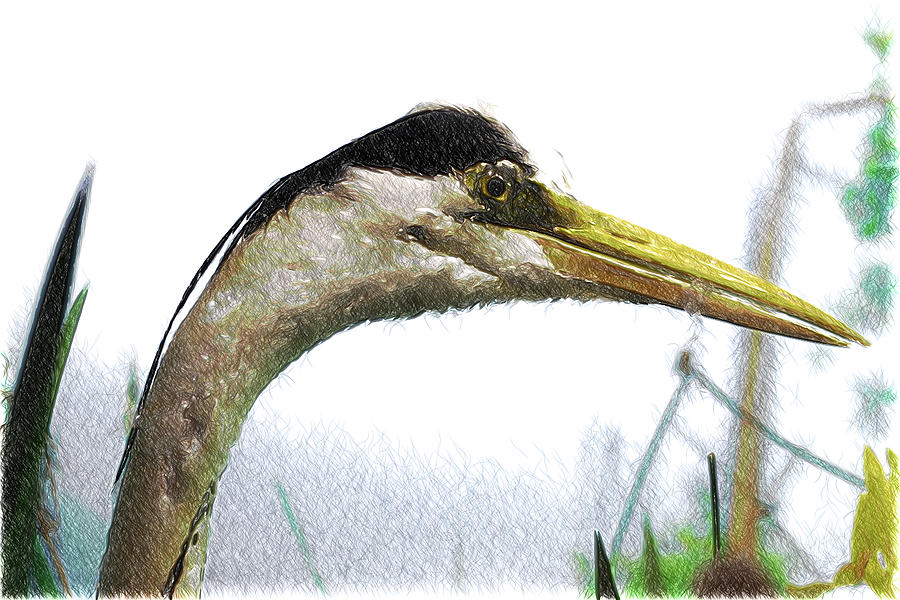 11448 Grey Heron Sketch Photograph
