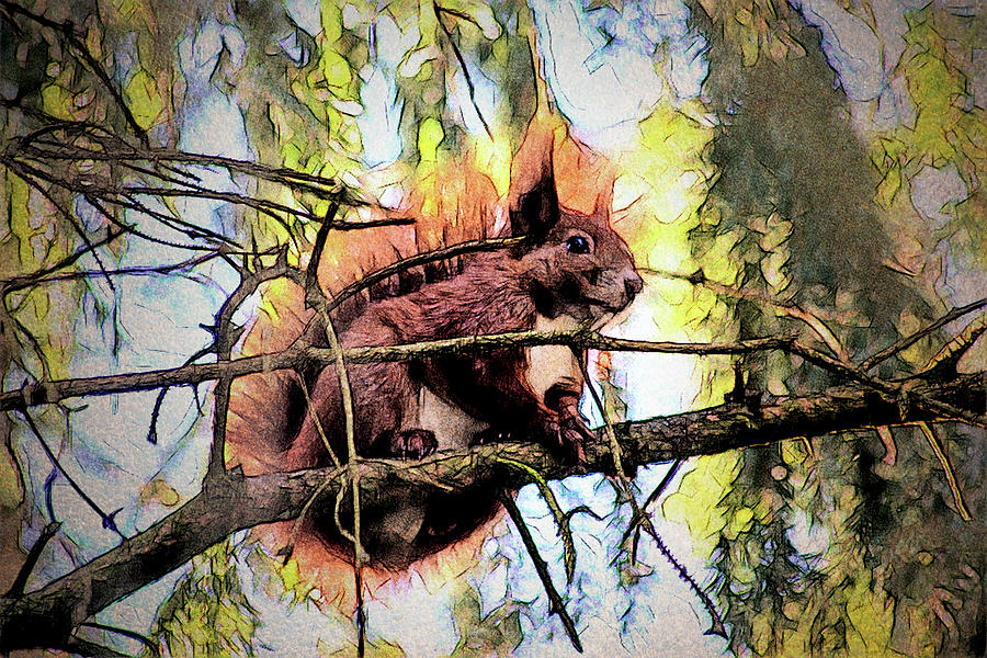 11451 Red Squirrel Sketch Photograph