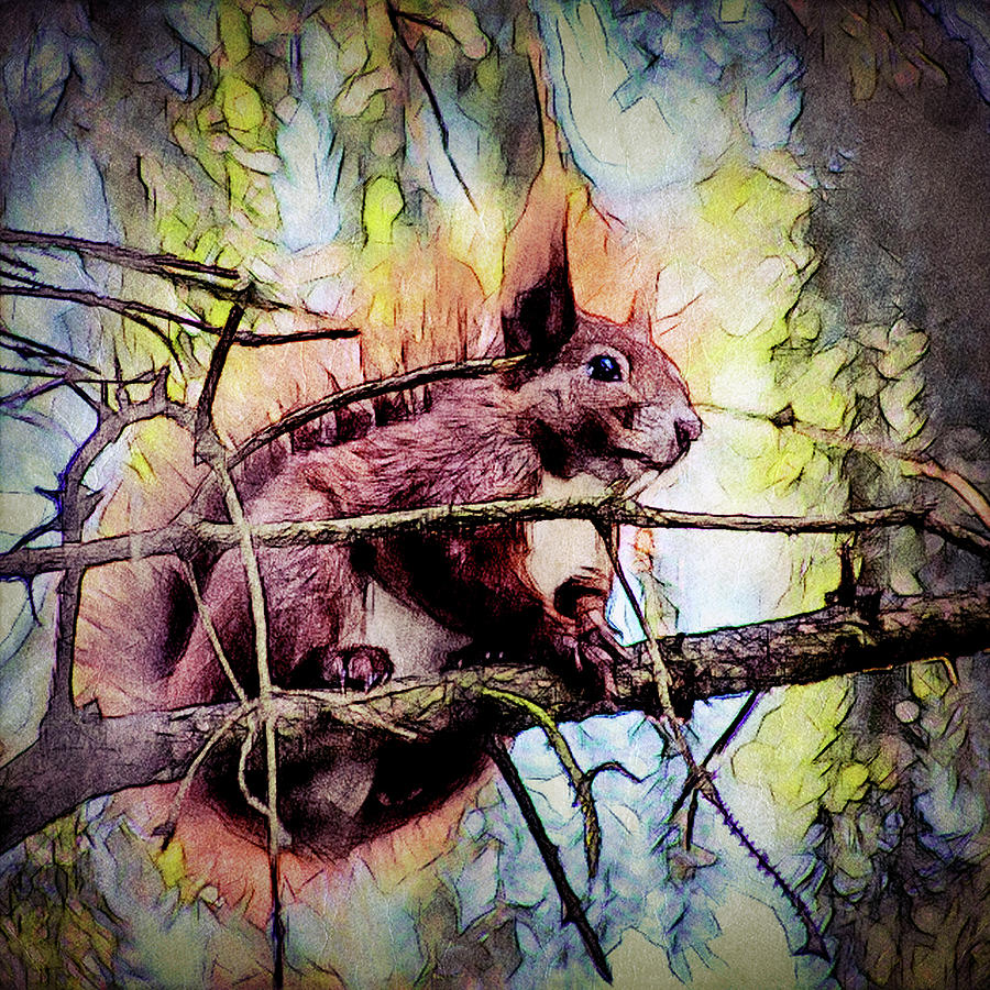 11452 Red Squirrel Sketch Square Digital Art