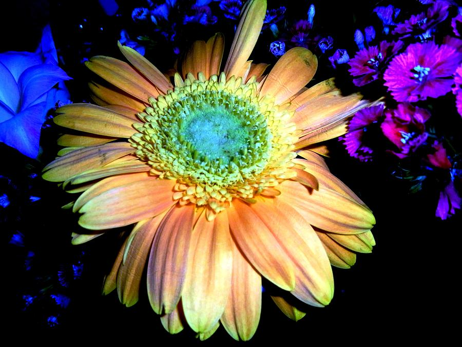 Flowers Photograph - Flowers by Bali Chadha