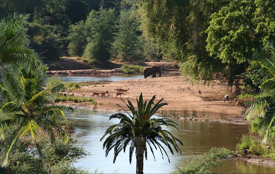 1194-senegal River Wildlife Digital Art by George W Banks
