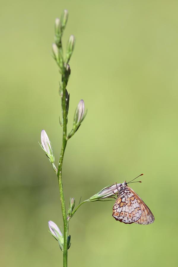 The Beauty Of Butterflies Photograph