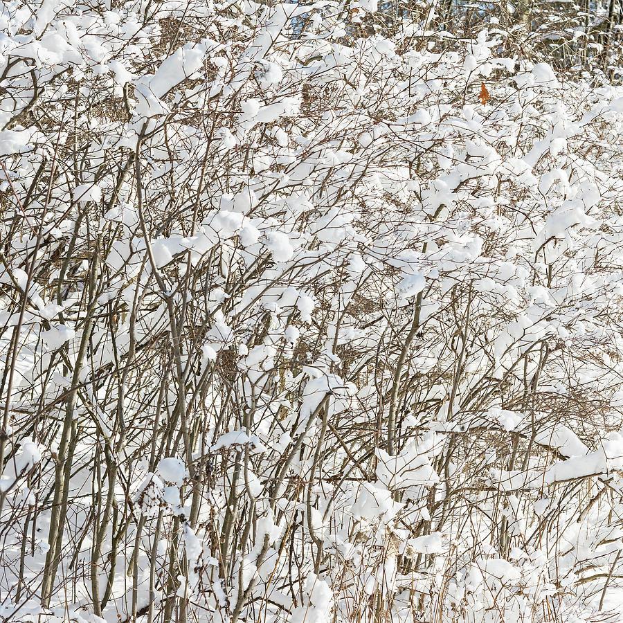 Winter Scene - Abstract Photograph