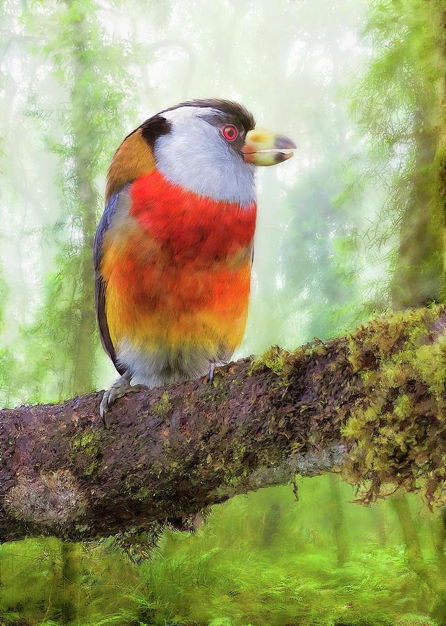 Toucan Barbet by Bill Johnson