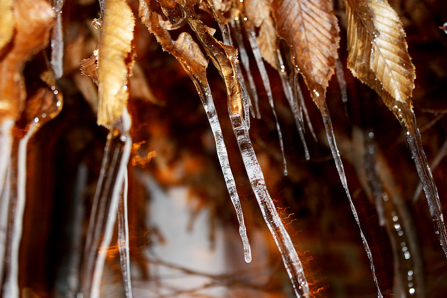 Ice Photograph - ice by Sibeal Colley