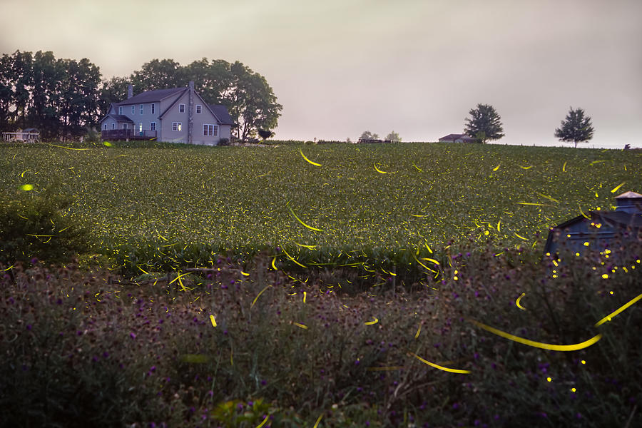 Fireflies Photograph - 1300 - Fireflies And The House On Hillside by Seth Dochter