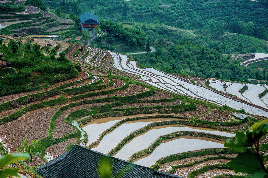 Terrace Photograph - Longji Terraced Fields Scenery by Carl Ning