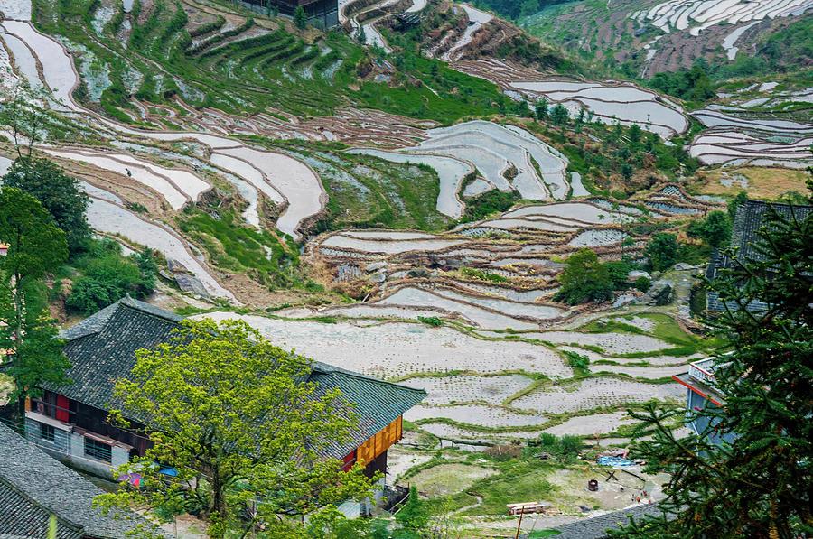 Terrace Photograph - Longji Terraced Fields Scenery by Carl Ning