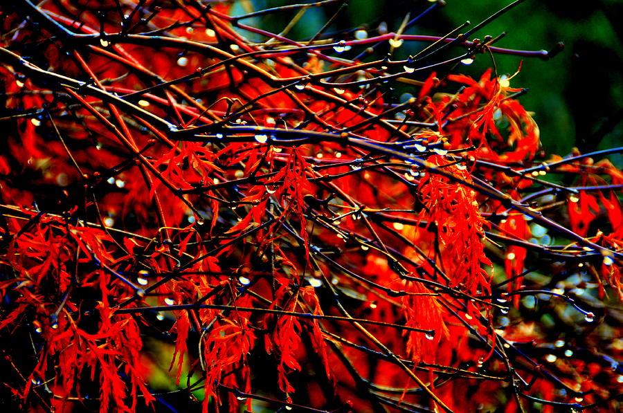 Lake View Digital Art - Autumn Colors by Aron Chervin