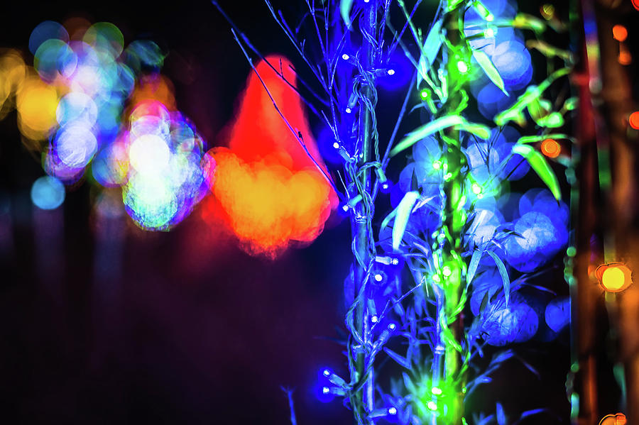 Lights Photograph - Christmas Season Decorations And Lights At Gardens by Alex Grichenko
