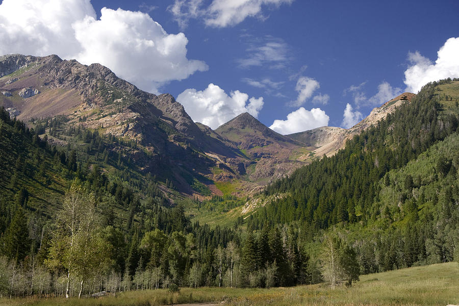 Background Photograph - Mountain Meadow by Mark Smith