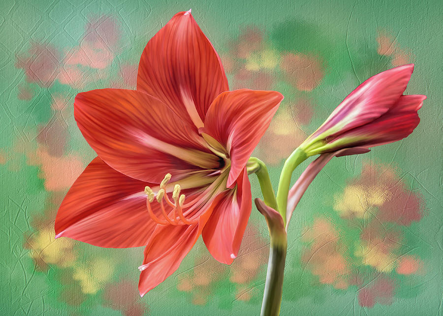 Amaryllis #1 by Bill Johnson