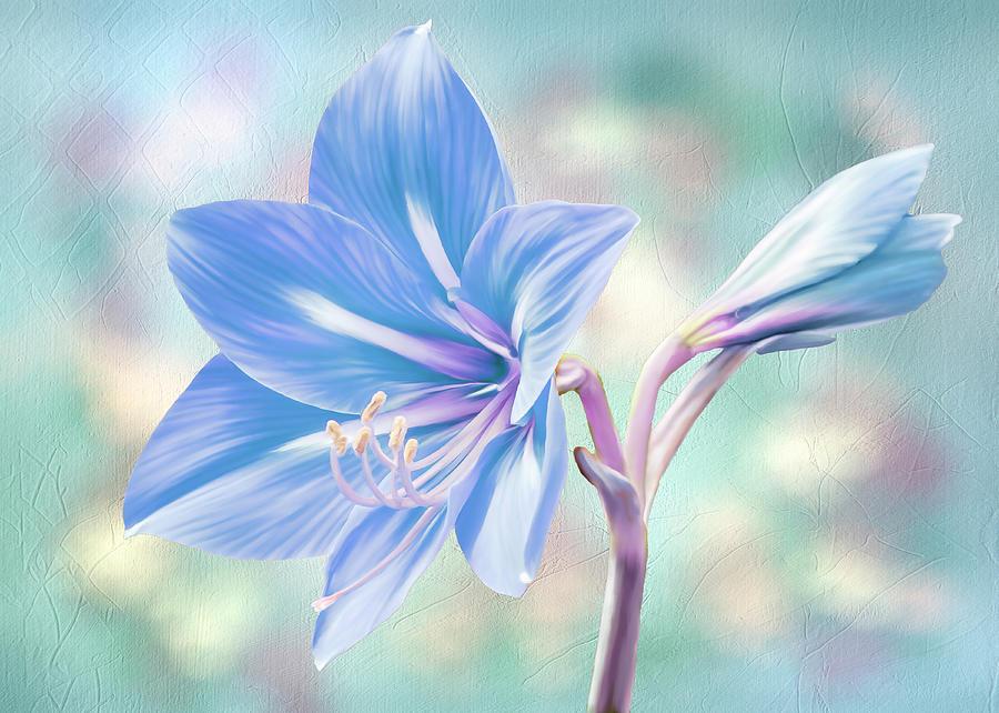 Amaryllis #2 by Bill Johnson