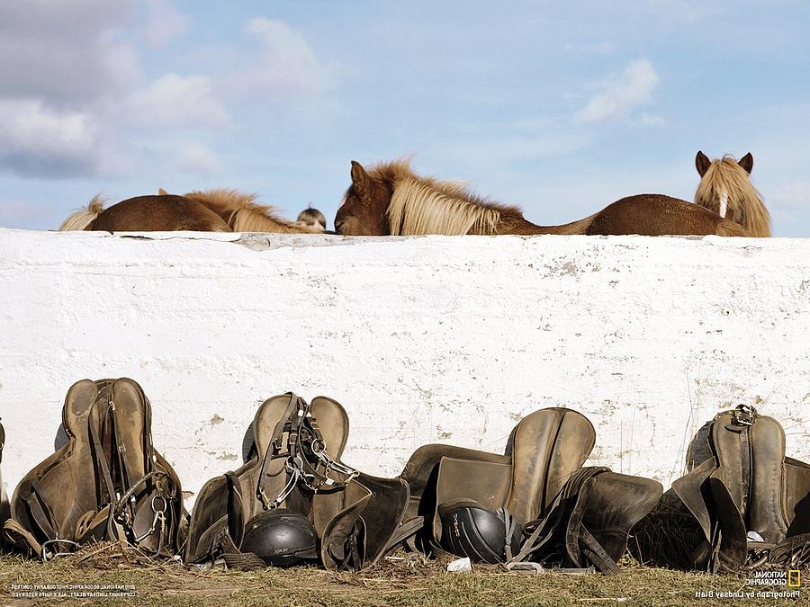 162669 Horse Walls Animals National Geographic Digital Art by Mery Moon