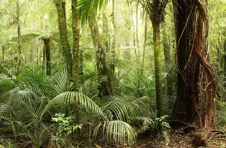 Jungle 79 Photograph