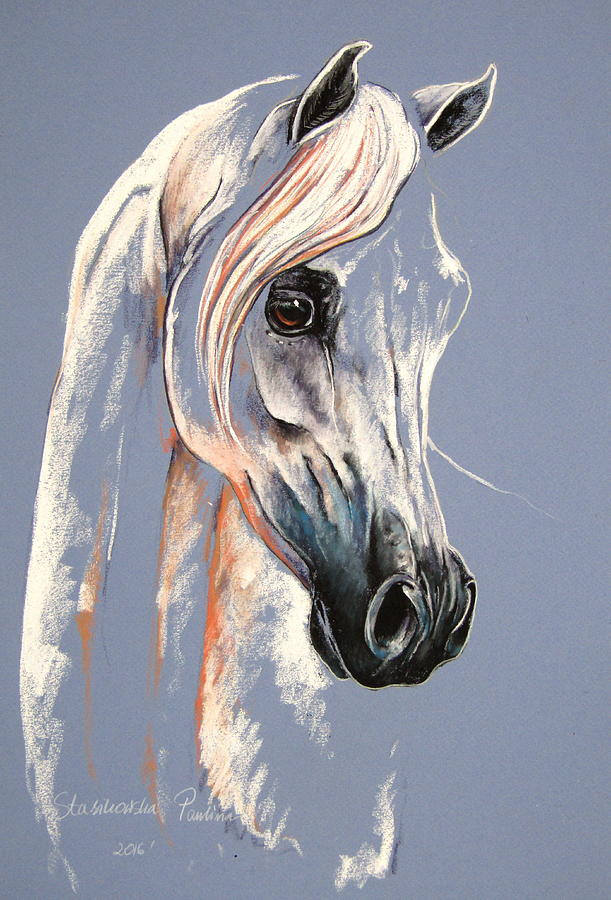 Arabian Horse Mixed Media By Paulina Stasikowska