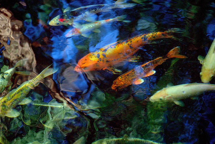 Koi Photograph - The Koi Pond by Marc Bittan