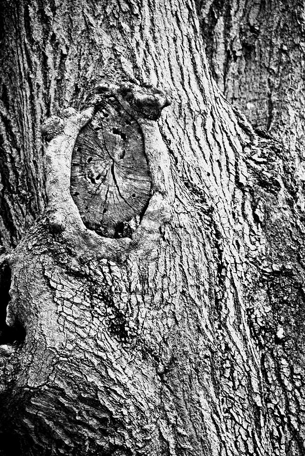 Tree Photograph - Untitled by Laura Burchfield