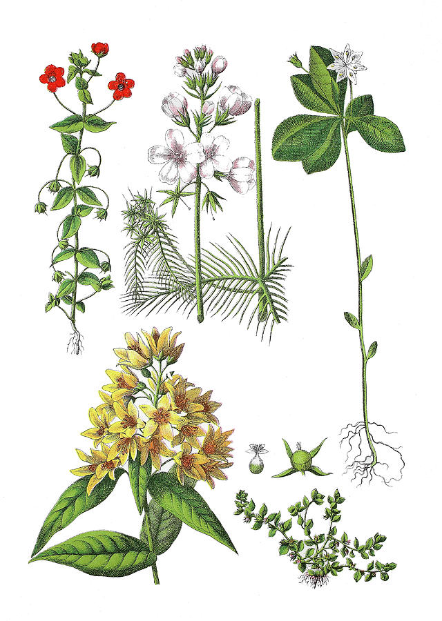 Various Medicinal Plants by Bildagentur-online