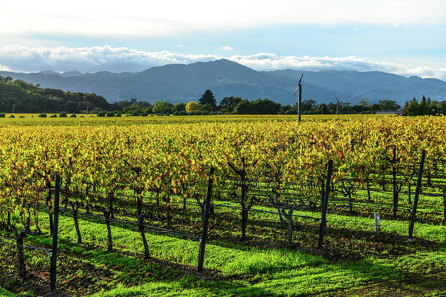 Napa Valley California Vineyard by Brandon Bourdages