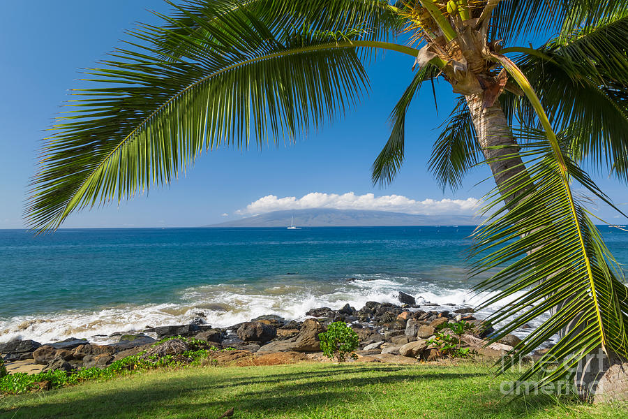Palm Tree Beach Photograph - Tropical Beach by Mariusz Blach