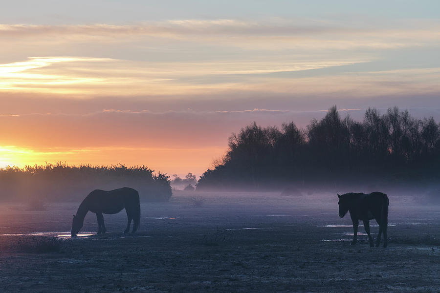 Pony Photograph - New Forest - England by Joana Kruse