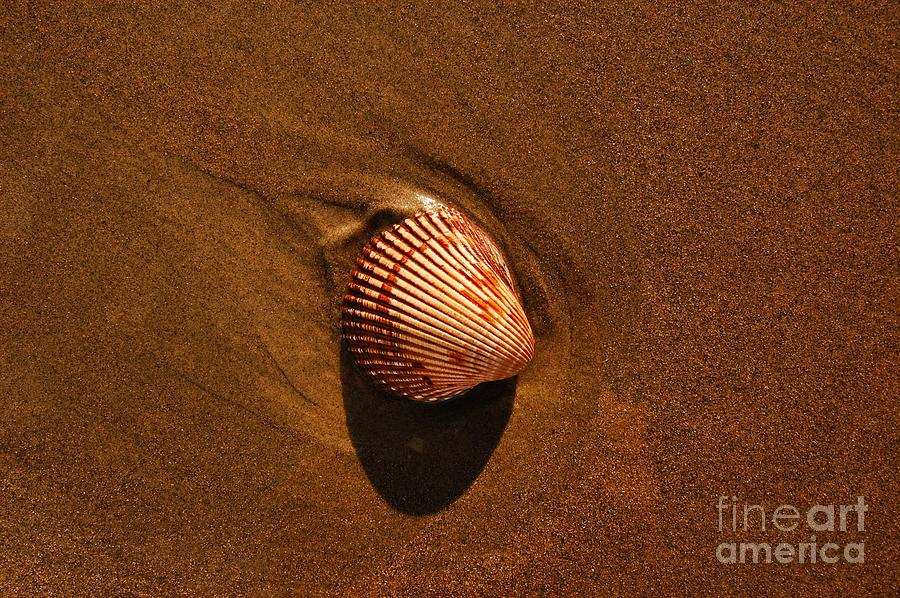 Beach Photograph - Beach Shell by Scott Diffee