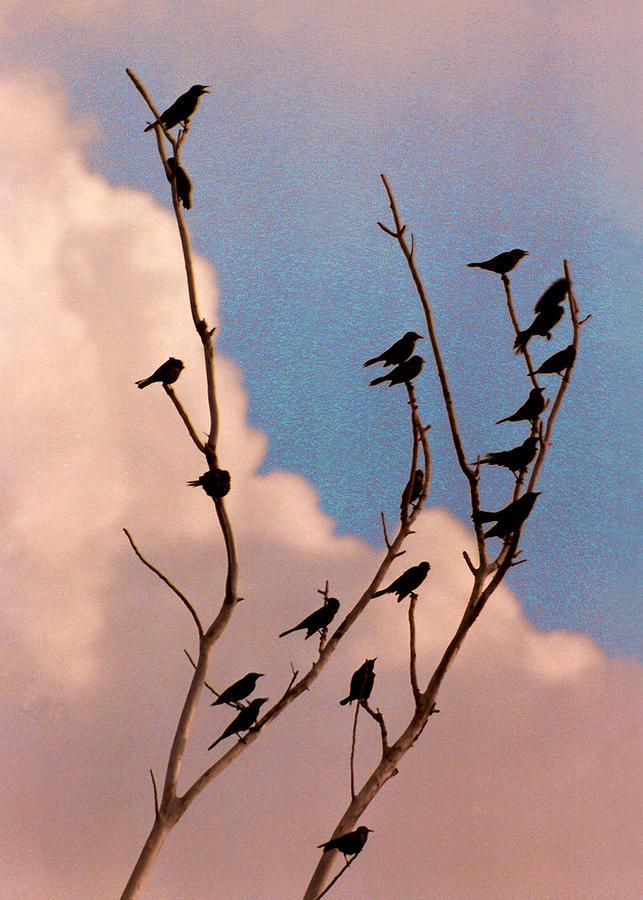 Birds Photograph - 19 Blackbirds by Steve Karol