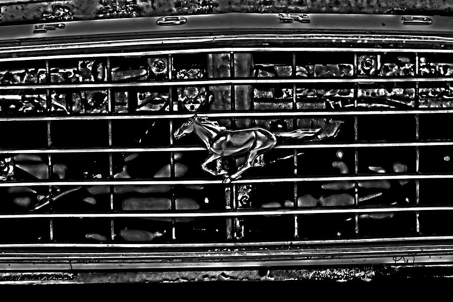 1977 Mustang Grill Photograph