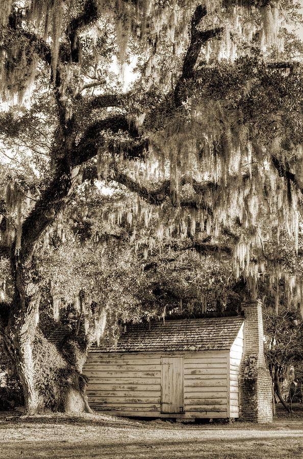 Live Oak Tree Photograph - 19th Century Slave House by Dustin K Ryan