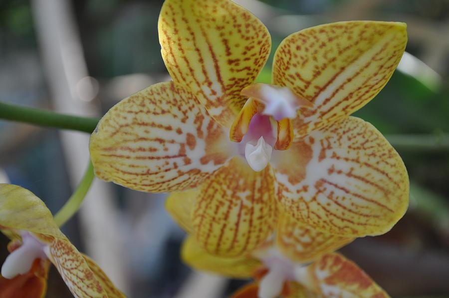 Flower Photograph - 26 by Sfinga Sfinga
